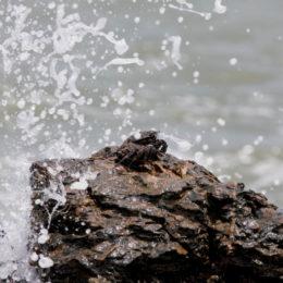 crabe et vague sur un rocher