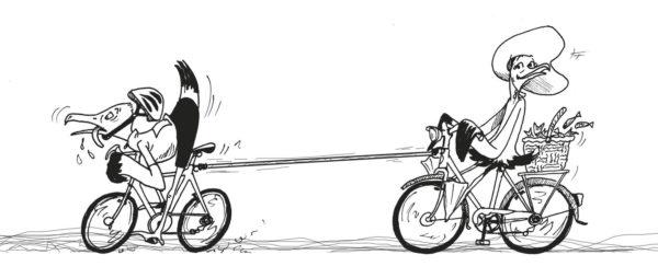 Mouettes vélo
